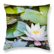 White And Pink Water Lily Throw Pillow