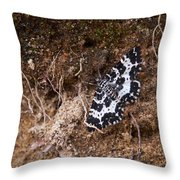 White-banded Black Moth Throw Pillow