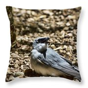 White-bellied Cuckoo-shrike Throw Pillow