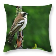 White-browed Sparrow-weaver Throw Pillow