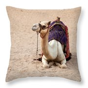 White Camel Throw Pillow by Jane Rix