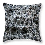 White Coral 1 Koh Kut Thailand Throw Pillow