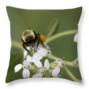 White Crownbeard Wildflowers Pollinated By A Bumble Bee With His Bags Packed Throw Pillow