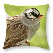 White Crowned Sparrow II Throw Pillow