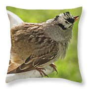 White Crowned Sparrow Sends A Warning Throw Pillow