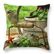 White Crowned Sparrows On The Flower Pot  Throw Pillow