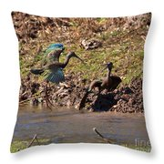 White-faced Ibis Mating Behavior In Early Spring Throw Pillow