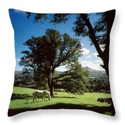 White Horse At Powerscourt, Co Wicklow Throw Pillow