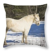 White Horse In Winter Maine Throw Pillow