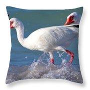 White Ibis On The Shore Throw Pillow