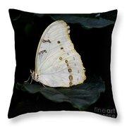 White Morpho Throw Pillow