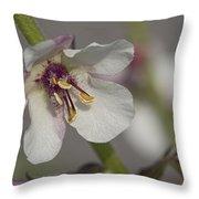 White Mullein - Verbascum Lychnitis Wildflower Throw Pillow