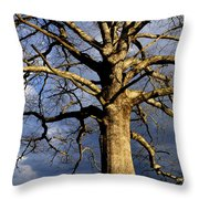 White Oak And Storm Clouds Throw Pillow by Thomas R Fletcher