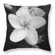 White Plumeria Bw Throw Pillow
