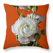 White Ranunculus Close Up In Red Vase Throw Pillow by Garry Gay