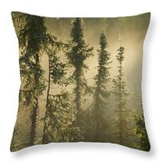 White Spruce In Mist At Sunrise Throw Pillow