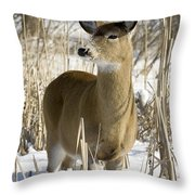 White-tailed Deer In A Snow-covered Throw Pillow