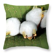 White Tent-making Bats Throw Pillow