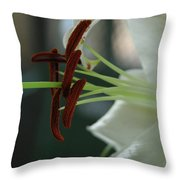 White Tiger Lily II Throw Pillow