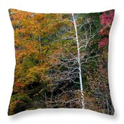 White Tree Fall Colors  Throw Pillow