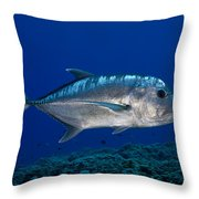 White Ulua Throw Pillow