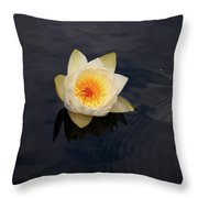 White Water-lily 2 Throw Pillow