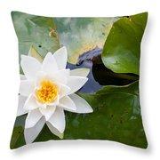White Water Lily Throw Pillow