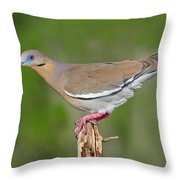 White Winged Dove Throw Pillow
