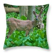 Whitetail 7335 Throw Pillow