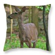 Whitetail 7338 Throw Pillow