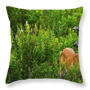 Whitetail Deer In Meadow, Killarney Throw Pillow