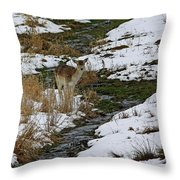 Whitetail Fawn In Winters Stream  Throw Pillow