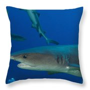 Whitetip Reef Shark, Papua New Guinea Throw Pillow by Steve Jones