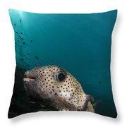 Wide-angle Image Of Pufferfish, Raja Throw Pillow