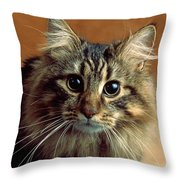 Wide-eyed Maine Coon Cat Throw Pillow