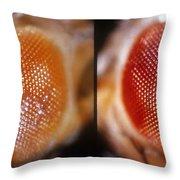 Wild & White-eosin Eyes In Drosophila Throw Pillow