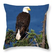 Wild Bald Eagle On Fir Tree Throw Pillow