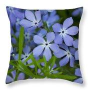 Wild Blue Phlox Flower 1 A Throw Pillow