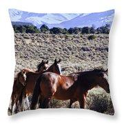 Wild Bunch Throw Pillow
