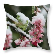 Wild Currant Blossoms Ribes Sanguineum Throw Pillow