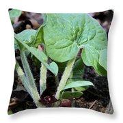 Wild Ginger Throw Pillow