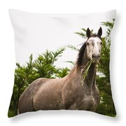 Wild Horse In The Wilderness Throw Pillow