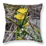 Wild Lettuce - Lactuca Virosa Throw Pillow