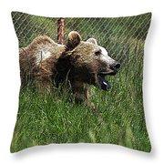 Wild Life Safari Bear Throw Pillow