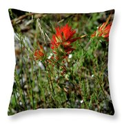 Wild Paint Brush Throw Pillow