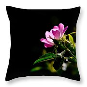 Wild Rose Along Galls Creek Throw Pillow