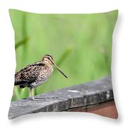 Wilson's Snipe Throw Pillow