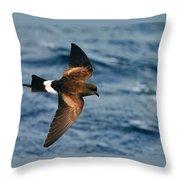Wilson's Storm-petrel Throw Pillow