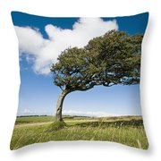 Wind-swept Solitary Tree On Open Grassy Throw Pillow