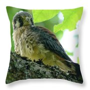 Windhover Throw Pillow